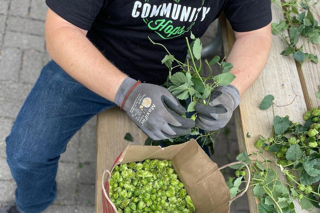 Venn Community Hops IPA • Photo via Venn Brewing